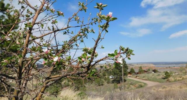 apple_tree_041417_02_1000