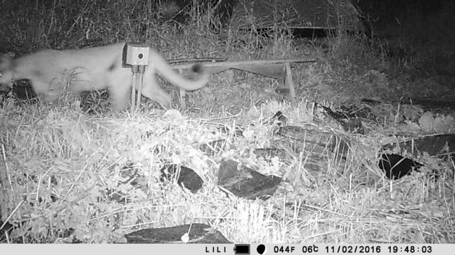 wildlife_camera_03_110216_1000