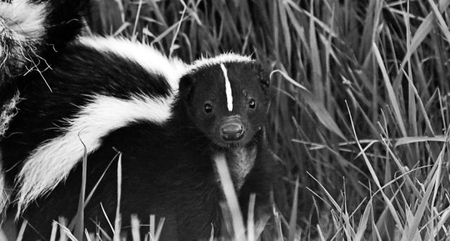 skunk_grass_1000x536