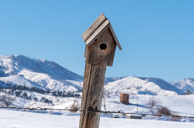 birdhouse-post-120119-1200