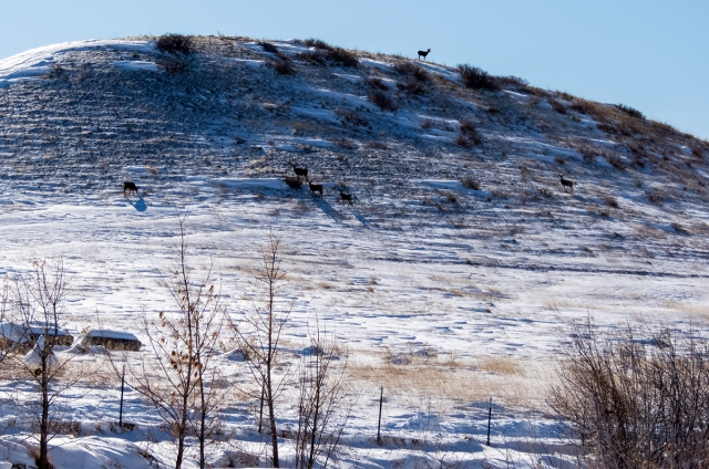deer-on-hill-120119-1200